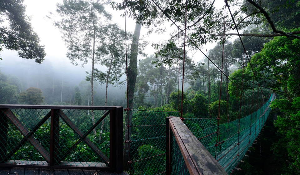 Canopy-Walkway-image-8