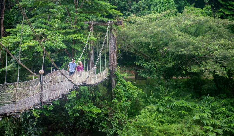 tourist-danum-valley-suspension-bridge